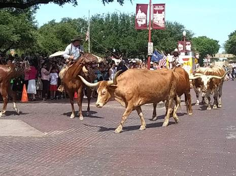 Finally saw the Longhorn Cattle Drive (well, the Longhorn Cattle Amble) at the Fort Worth Stockyards